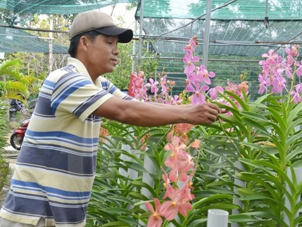 Renforcement de l'octroi des credits a l'agriculture au Vietnam hinh anh 1