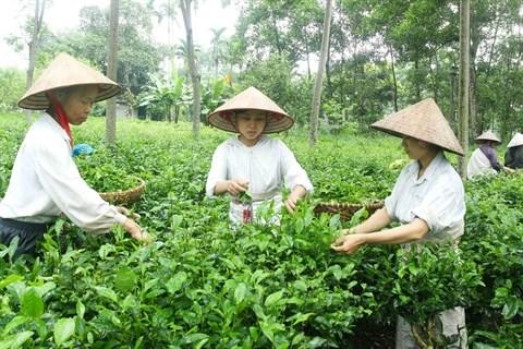 Les campagnes de Hanoi a l'heure de l'integration hinh anh 1