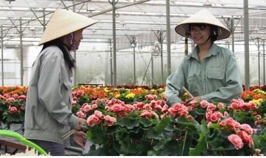 Russie, nouveau debouche prometteur pour les fleurs de Da Lat hinh anh 1