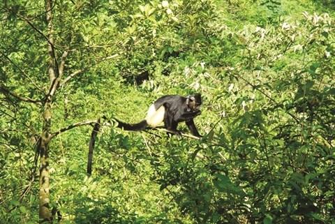 Parc national de Cuc Phuong, la biodiversite grandeur nature hinh anh 2