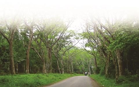 Parc national de Cuc Phuong, la biodiversite grandeur nature hinh anh 1