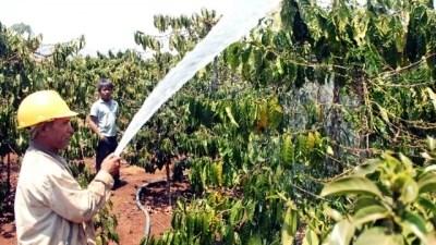 Plus de 4.000 milliards de dongs pour le developpement durable du cafe a Lam Dong hinh anh 1