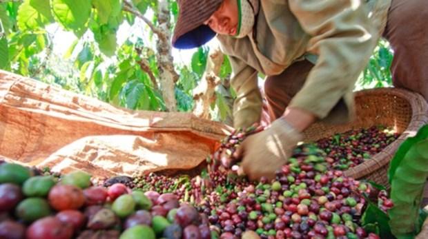 Baisse des exportations de produits agro-sylvicoles et aquatiques en dix mois hinh anh 1