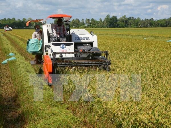 Application des TI japonaises dans la production agricole a Ha Nam hinh anh 1