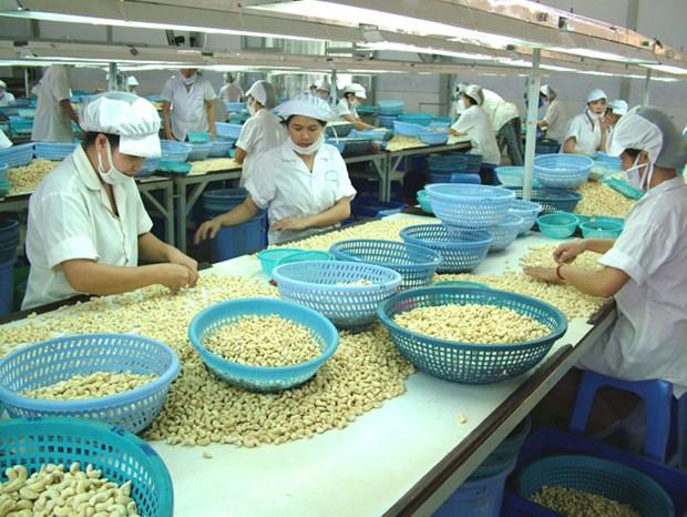 Hausse de 18% des exportations vietnamiennes de noix de cajou hinh anh 1