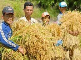 BAD : le taux de pauvrete du Vietnam est le plus bas d'Asie-Pacifique hinh anh 1
