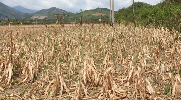 Aide des localites dans la lutte contre la secheresse et la salinisation hinh anh 1