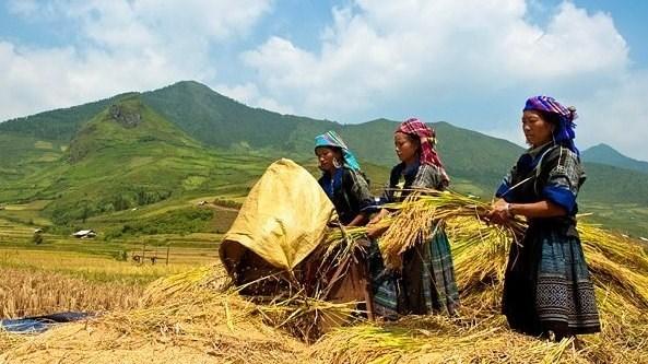 Enquete sur la situation socio-economique des ethnies minoritaires hinh anh 1