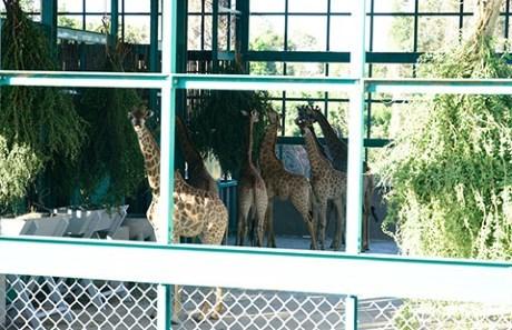 Installation de 200 animaux rares au Vinpearl Safari Phu Quoc hinh anh 1