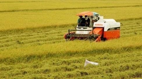 Le delta du Mekong accueillera une nouvelle vague d'investissement japonais hinh anh 1