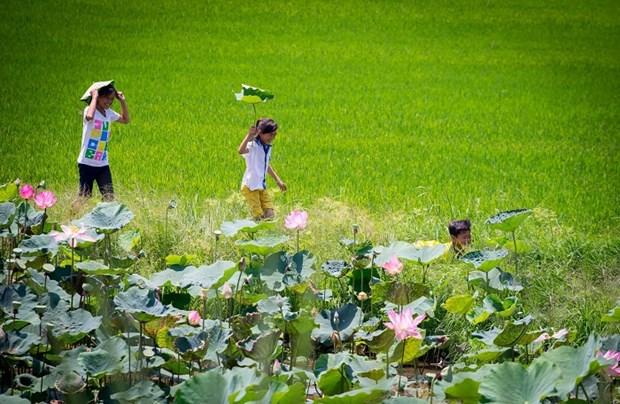 Vietnam - Pays-Bas : cooperation entre la province de Dong Thap et la ville d'Emmen hinh anh 1