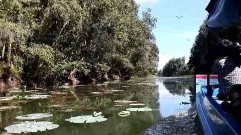 La zone humide de Lang Sen, 7e site Ramsar du Vietnam hinh anh 1