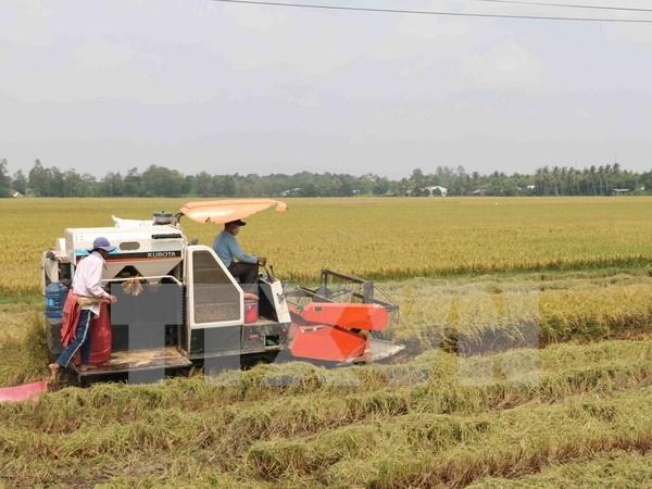 Bond des exportations nationales de riz en novembre hinh anh 1