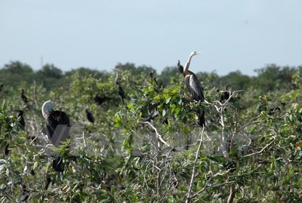 Le parc naturel de Prek Toal est devenu le 4e site Ramsar du Cambodge hinh anh 1