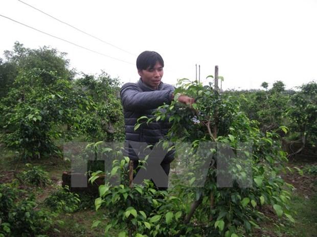 Le PNUD aide le Vietnam a construire un nouveau modele de croissance hinh anh 1
