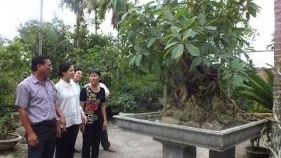 Role du secteur des animaux et plantes d'agrement dans l'agriculture hinh anh 1