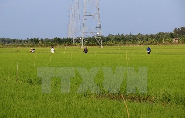 Japon et Vietnam s'engagent a promouvoir leur cooperation agricole hinh anh 1