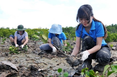 Efforts pour la protection de l'environnement hinh anh 3