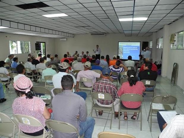 Le Panama souhaite cooperer avec le Vietnam dans la riziculture hinh anh 1