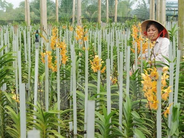 Decouverte de huit nouvelles especes d'orchidee au Tay Nguyen hinh anh 1