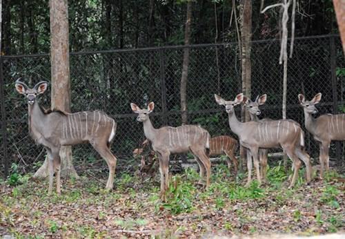 Inauguration du Parc Vinpearl Safari Phu Quoc hinh anh 6