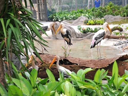 Inauguration du Parc Vinpearl Safari Phu Quoc hinh anh 5
