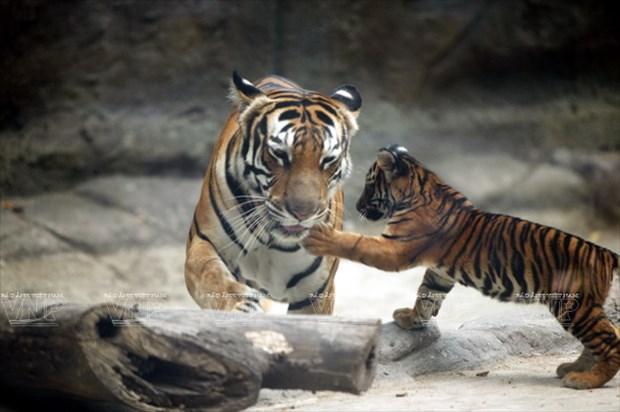 Le jardin zoologique et botanique de Saigon fete ses 150 ans hinh anh 2
