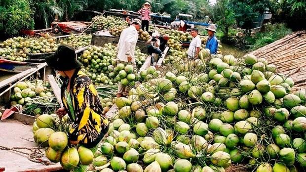 Produits a base de noix de coco : 30% des exportations de Ben Tre hinh anh 1