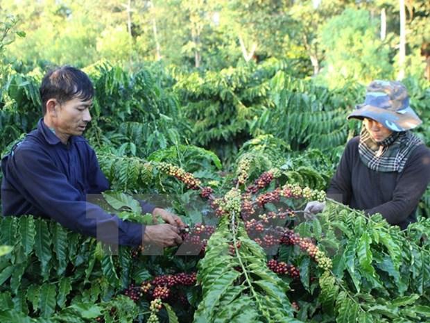 Agriculture lato sensu : excedent commercial de 7 milliards de dollars hinh anh 1