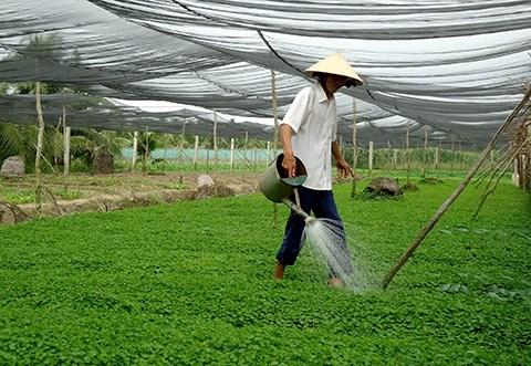 Le fonds d'assistance aux agriculteurs de HCM-Ville en action hinh anh 1