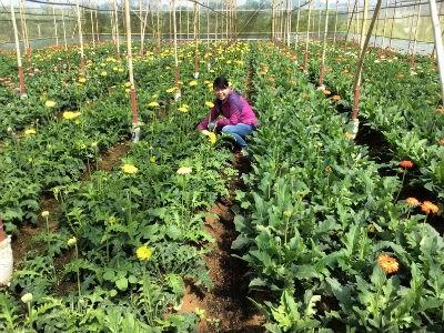L'agriculture attire de plus en plus les investisseurs japonais hinh anh 1