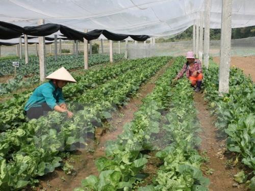 Agriculture : Nam Dinh et Miyazaki (Japon) renforcent leur cooperation hinh anh 1