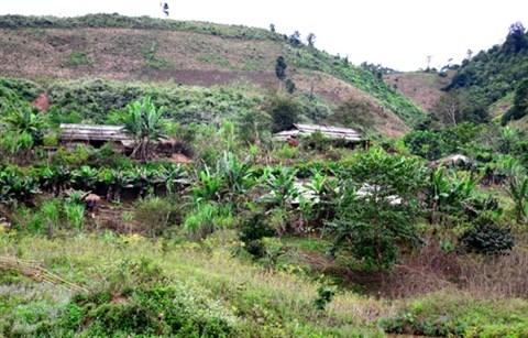 Stabiliser la vie de la population du district de Muong Nhe hinh anh 1
