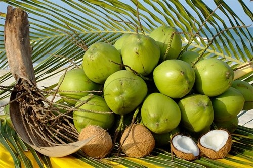 Ben Tre: Les produits a base de coco sont prises en Asie hinh anh 1