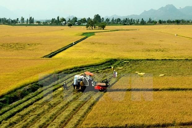 Satake veut fournir des machines agricoles modernes a Can Tho hinh anh 1