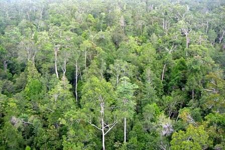 Le Vietnam s'engage dans la gestion durable des forets hinh anh 1