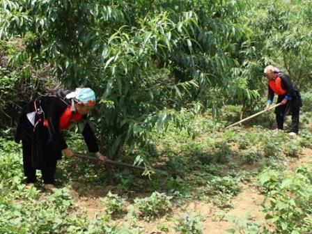 Faciliter l'acces au foncier forestier pour les ethnies minoritaires hinh anh 1
