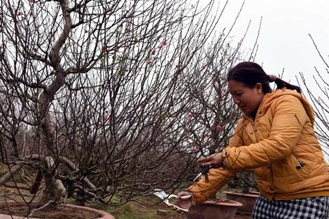 Village de fleurs avec de grands succes a l'approche du Tet hinh anh 1