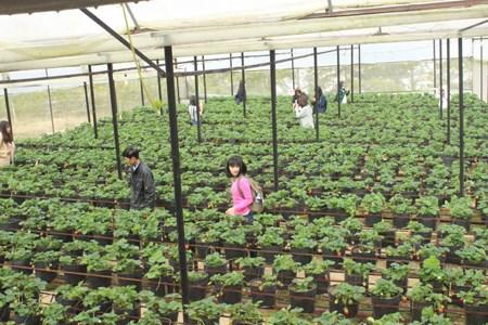 Tourisme agricole a Dalat hinh anh 3