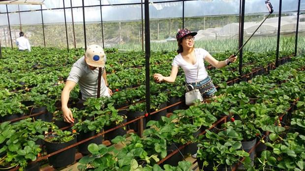 Tourisme agricole a Dalat hinh anh 2