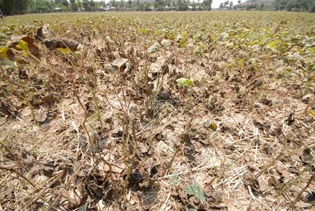 Le gouvernement renforce les mesures de lutte contre la secheresse et la salinisation hinh anh 1