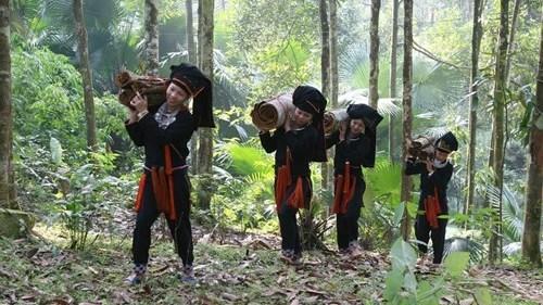Nouvelle ruralite : le cannelier, «l'arbre de vie» des Dao de Yen Bai hinh anh 2