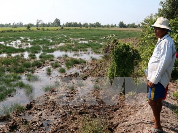 Le Delta du Mekong menace par les barrages hydroelectriques hinh anh 2