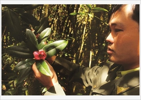 Lang Biang met a l'honneur l'ecotourisme hinh anh 2