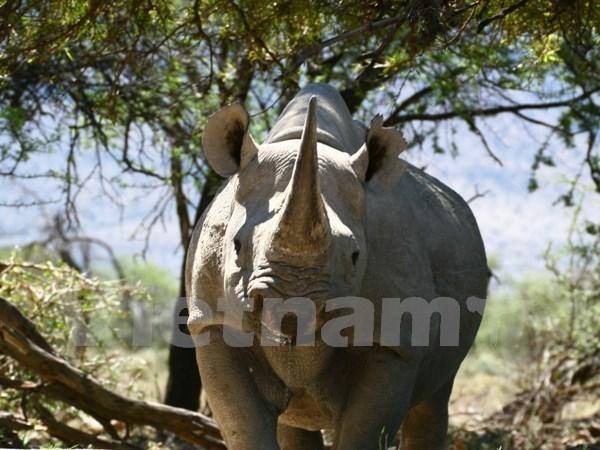 Actions plus energiques pour sanctionner le trafic et la consommation d'animaux sauvages hinh anh 1