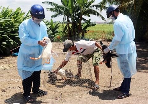 Renforcer la lutte contre les zoonoses hinh anh 2