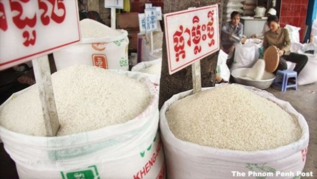Cambodge : les exportations de riz en hausse de 8,5 % au premier trimestre hinh anh 1