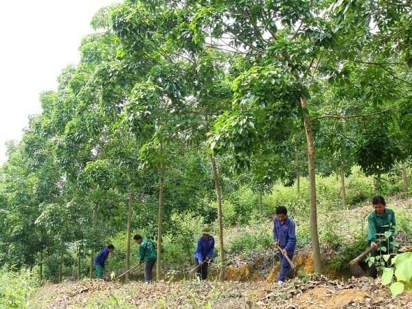 JICA aide la region du Tay Bac dans la gestion durable des ressources naturelles hinh anh 1