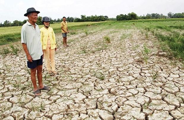Aide de pres de 485 milliards de dongs contre la secheresse et la salinisation hinh anh 1