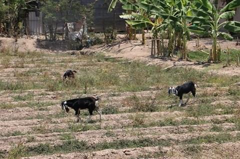 Surveillance stricte des substances a risques dans le secteur de l'agro-alimentaire hinh anh 2